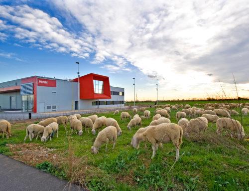 Betriebsgebäude mit Lager- und Büroflächen